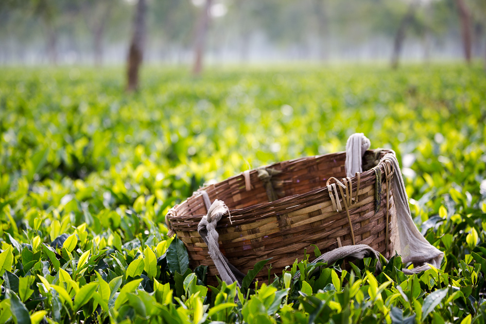 Tea picker's basket, Assam