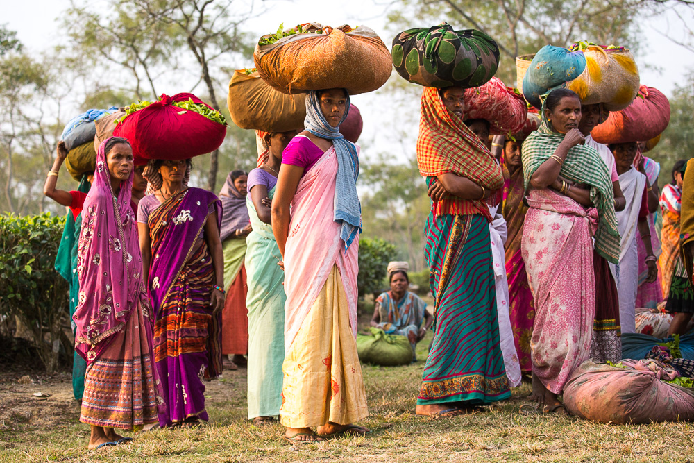 The day's pickings, Assam