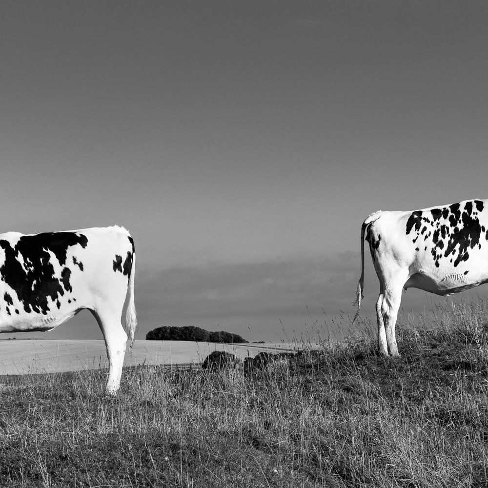 On King's Play Hill, Wiltshire. From the forthcoming series 'All Along the Watershed'