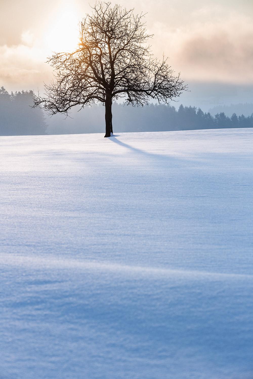 Wintermorgen_0239.jpg