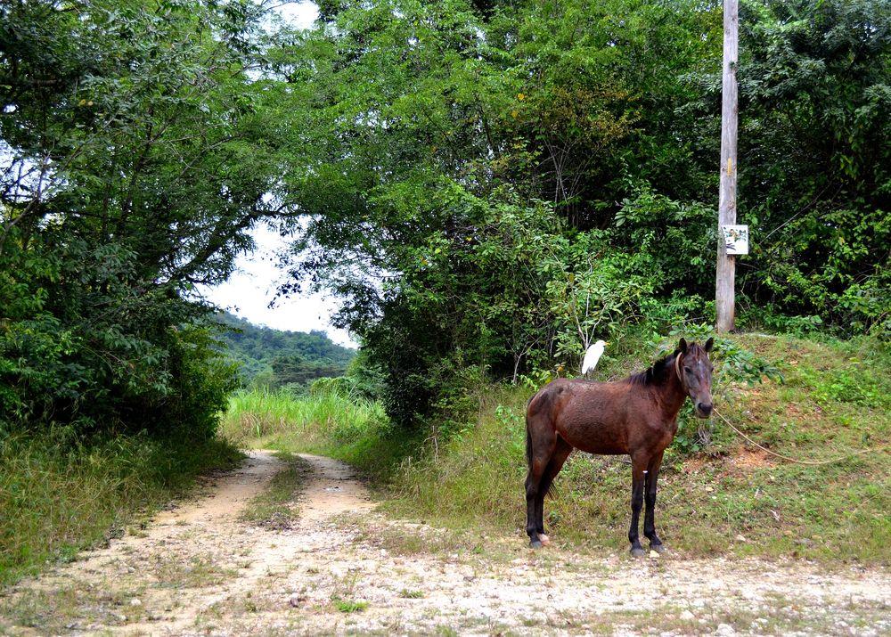 horse and bird friends.JPG