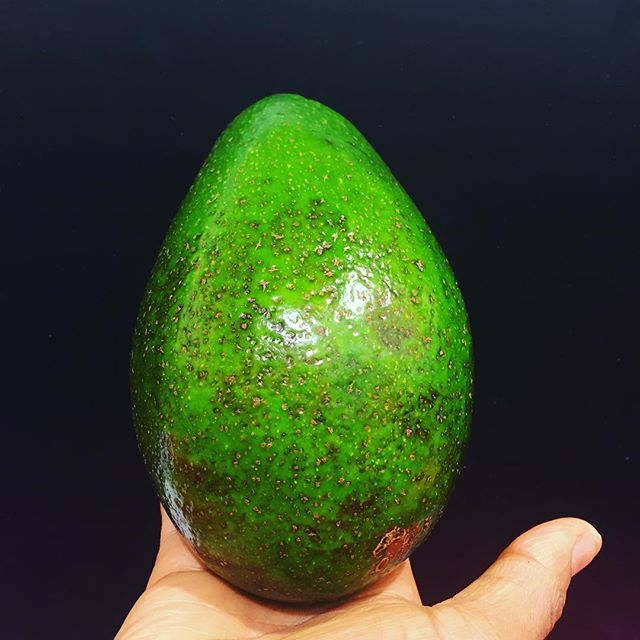 We make a perfect 'pear'... My friend Anthony reminded us that avocados in is home, Jamaica, are referred to as pears. This lady pear was grown in Florida. She's awaiting the top of a lunchtime salad. #EatMoreAvocado #HealthyFats #BrainFood #Omega3 #FattyAcids #EyeHealth #HelpsAbsorbOtherNutrients #ReachDailyFatQuotabyThirtyPercent #ReduceCholesterol #Rawonwheels #HealthExperts #urbanveganrealness #floridaavocado
