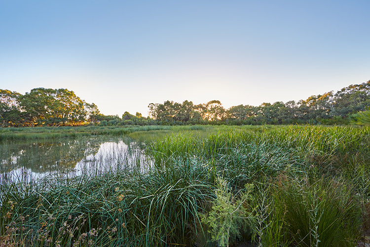 Eric Singleton Bird Sanctuary - Landscape Architecture by GHDWoodhead
