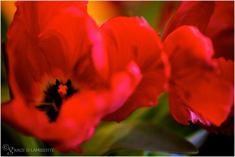 84-flowers-IMG_6680.jpg