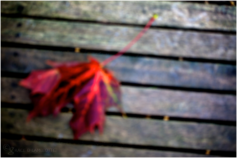 75-autumn-leaf-IMG_4395.jpg