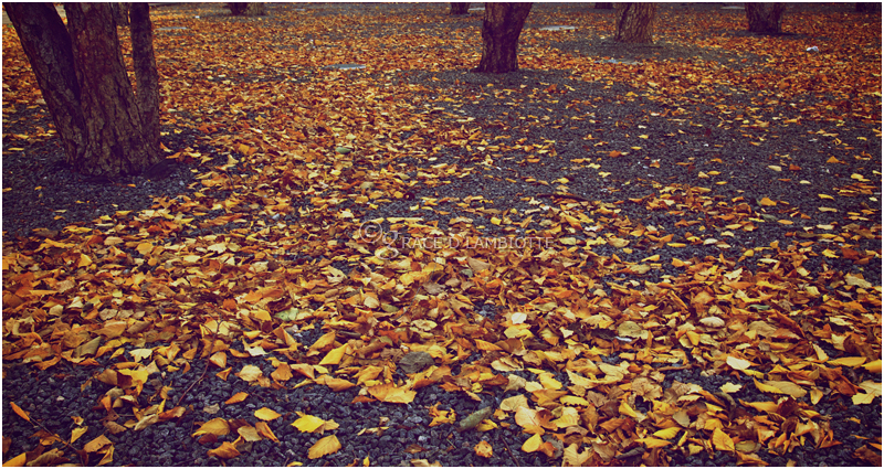 79-autumn-leaves-IMG_4587.jpg