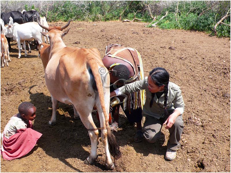 57-milking-datoga-tribe-Tanzania-078.jpg