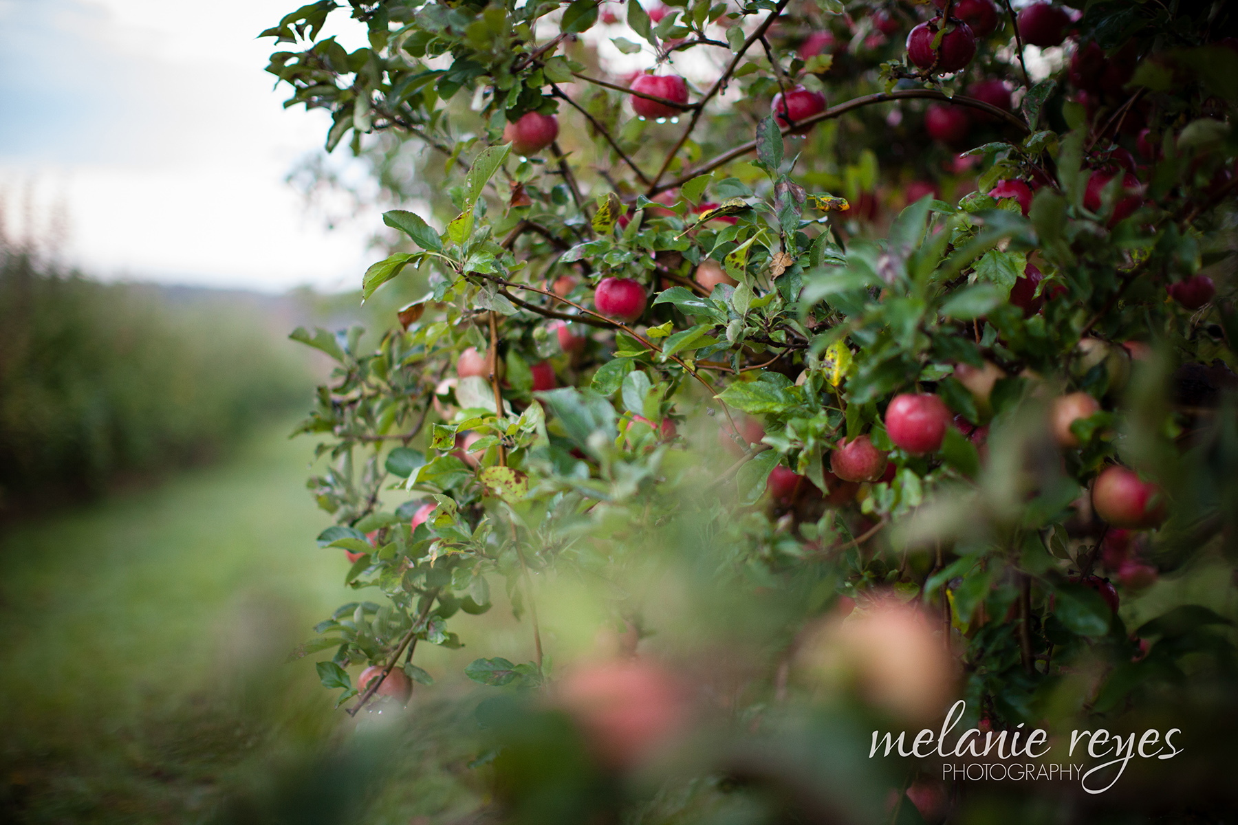 JeffAdrienne_Michigan_Wedding_Photography_Ann_Arbor_Spicers_Orchard_002
