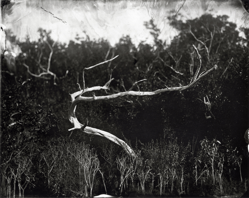 Buttonwood Tree, 2010