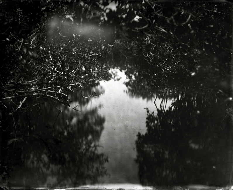 Mangrove, Hell's Bay, 2010