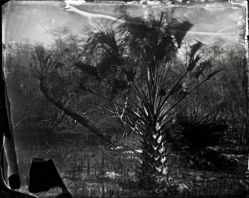 Singed Palms, 2009