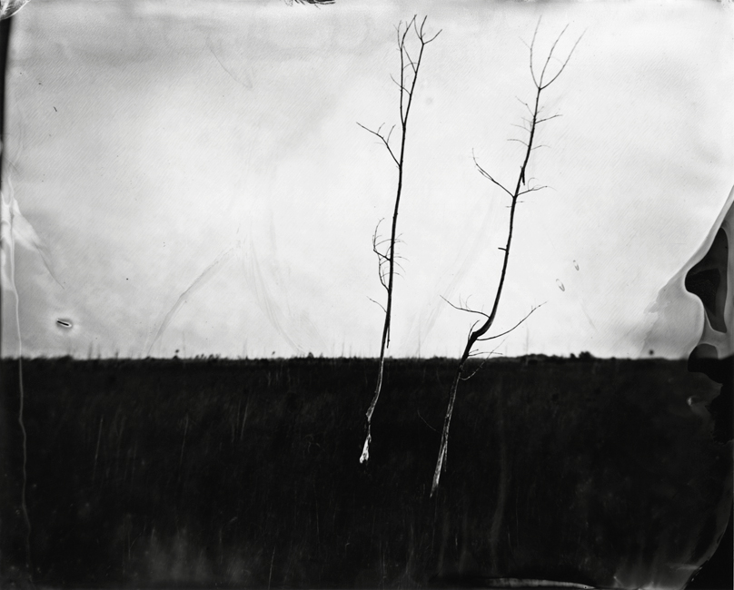 Two Trees in Sawgrass, 2011