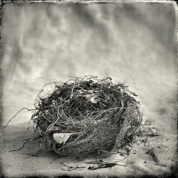 Nest #6