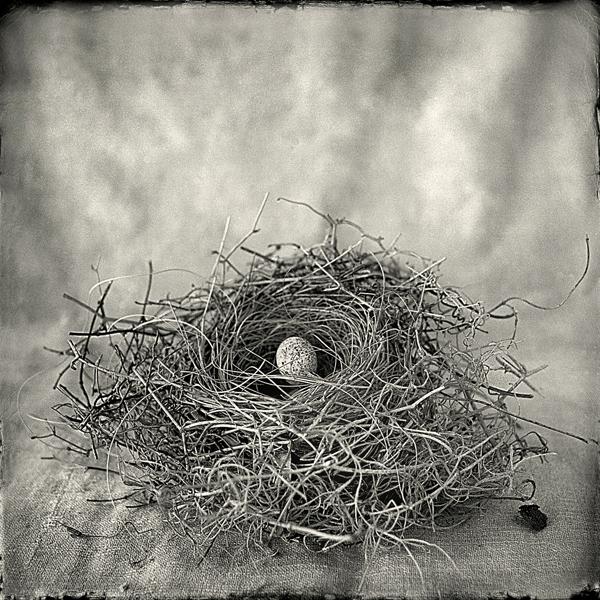 Nest #5