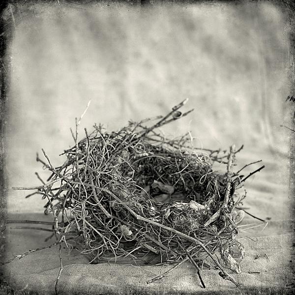 Nest #7