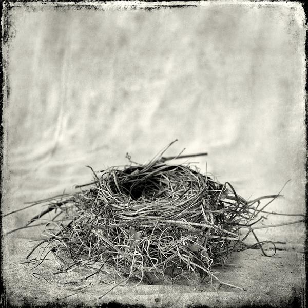 Nest #10