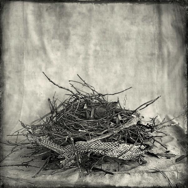 Nest #11
