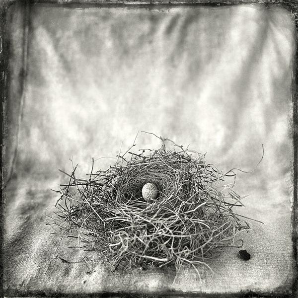 Nest #12