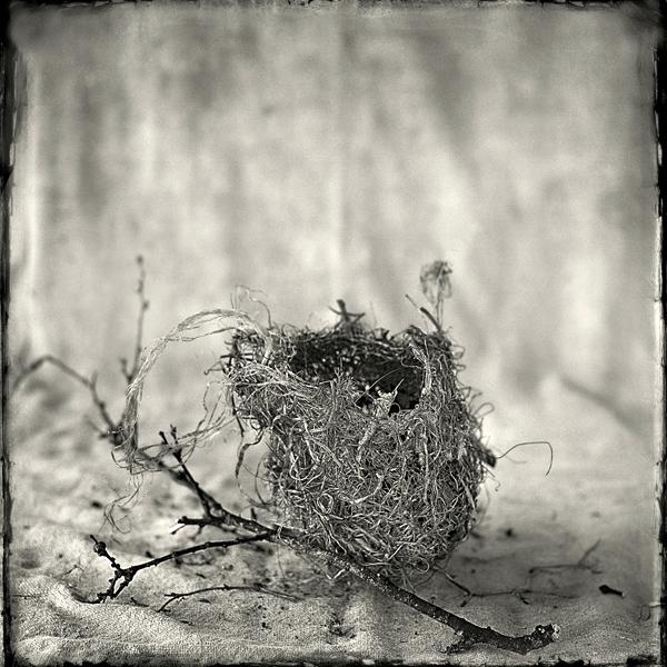 Nest #13