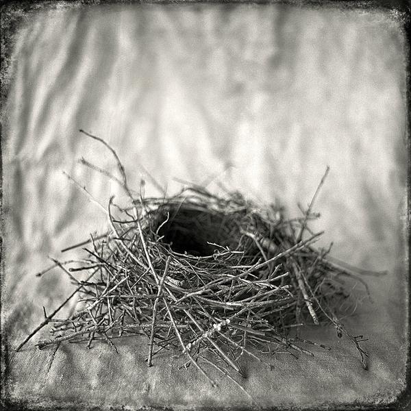 Nest #14