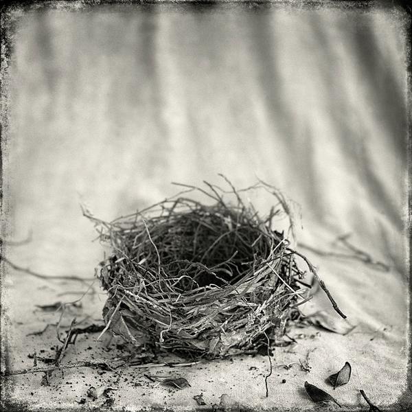 Nest #16