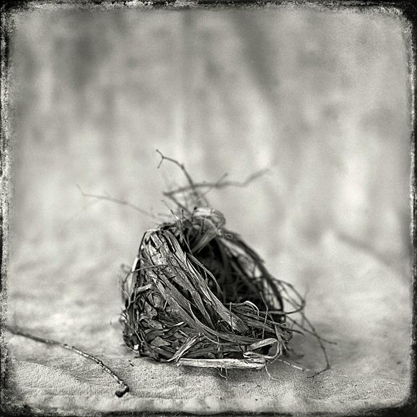 Nest #15