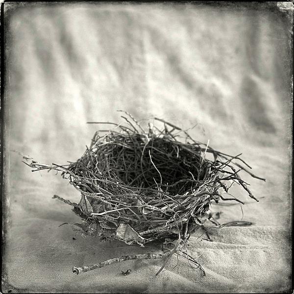 Nest #17