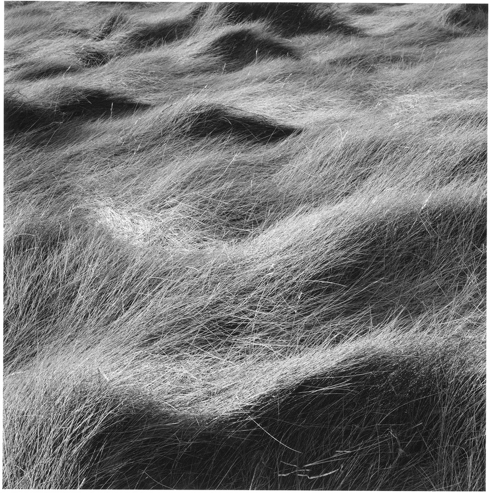 Salt Marsh Grass #24, 1999