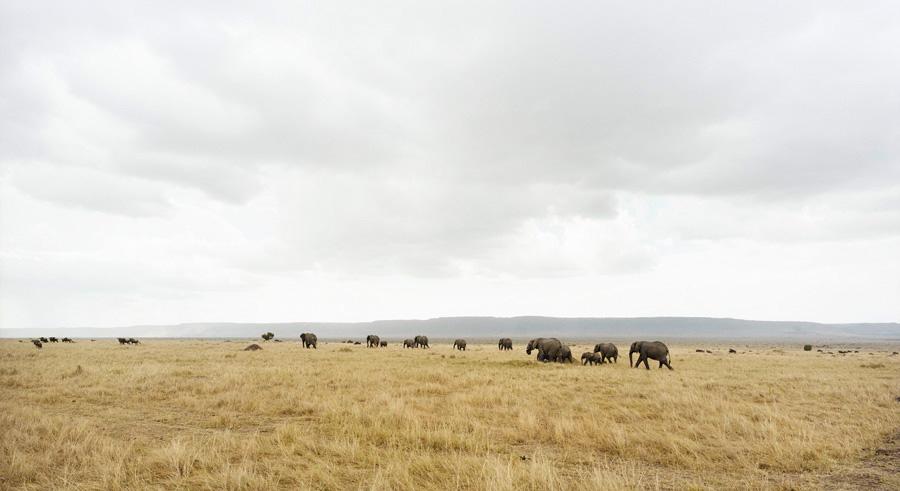 Masai Mara II, 2009.jpg