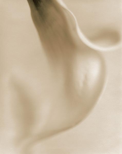 Calla Lily I, 1996,