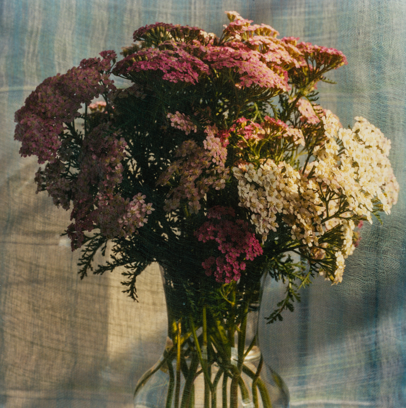 PETER C JONES - Achillea, No. 2, 2008 - W -.jpg