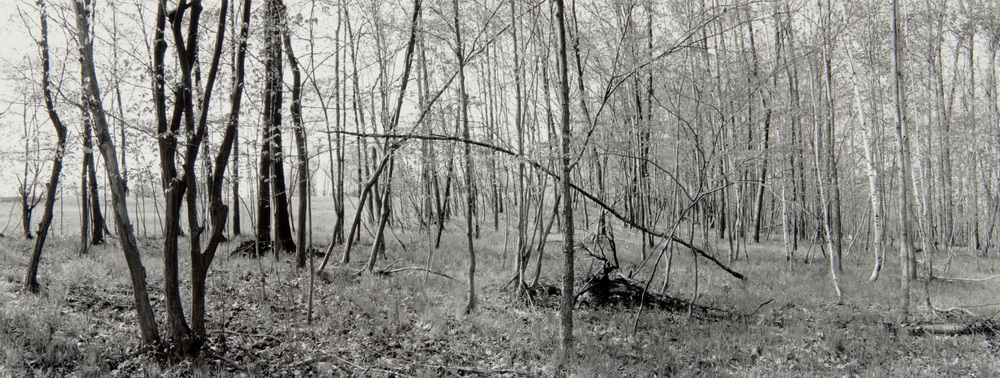 E. Lindbloom, Light Woods, Saratoga Battlefield, 1996, gsp.jpg