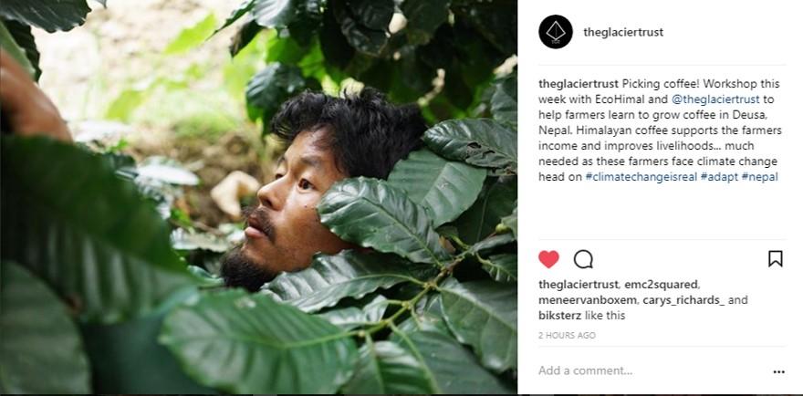 InstagramGrab_CoffeeHarvest_DeusaJan2018.jpg
