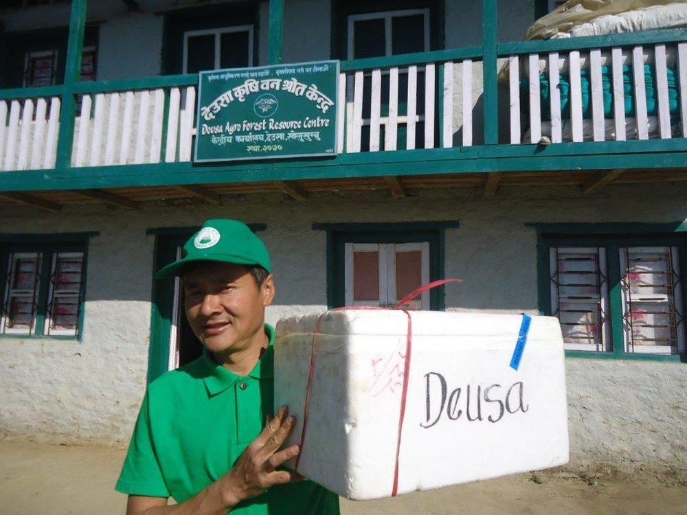 Deusa AFRC manager Keshab Rai receives first batch of Hazelnut seedlings in 2017.