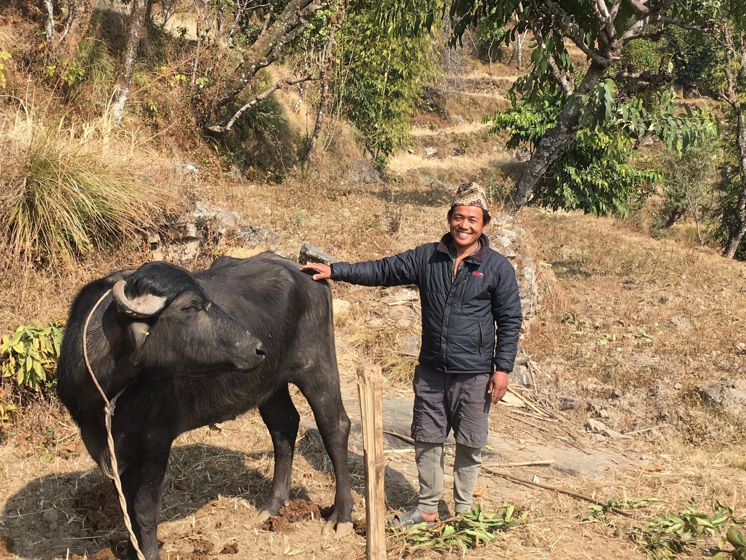 Murra Buffalo and farmer in Deusa Nepal The Glacier Trust