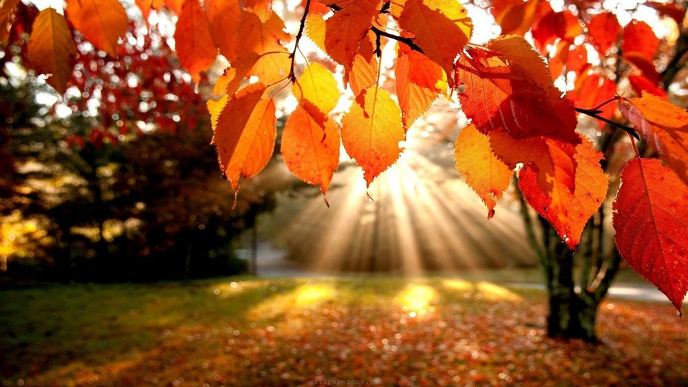 The leaves are going to start changing color and you may have noticed the air is lighter, a little crisper and more clear. The mornings are a little cooler signaling the cooler weather. It is an important time to prepare the body for the coming colder months.