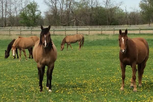 horses for sale in wisconsin.jpg