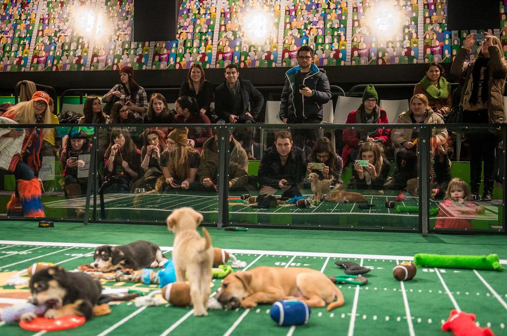 Puppy Bowl - People Watching Puppies (1).jpg