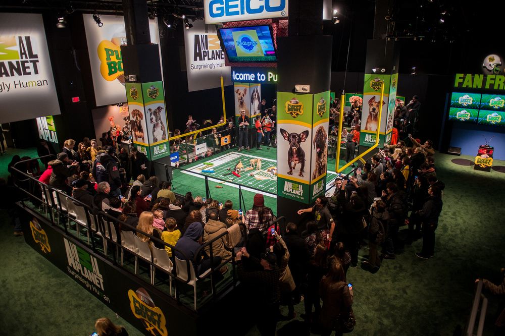 Discovery Communications - Puppy Bowl Experience X
