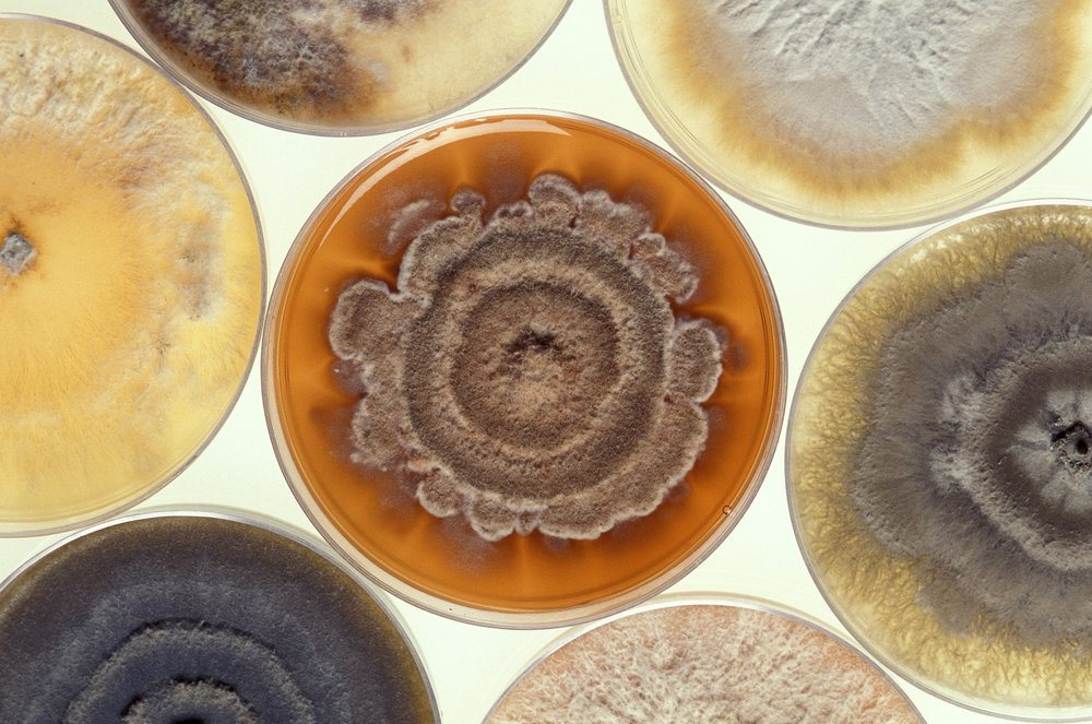 Mold is just the tip of the iceberg... - ...when it comes to problems that occur in poorly designed and built homes. The full microbiome in our indoor spaces consists of bacteria, protozoa, archaea, and a whole host of other particulates, dust mites, and tiny invisible things that are directly interacting with your physiology.