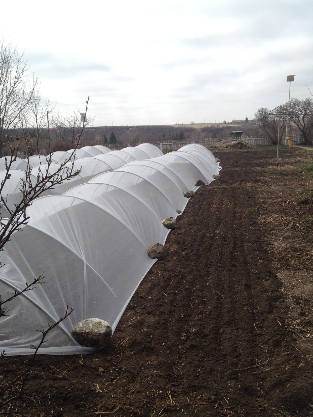 green-sister-gardens-urban-farming
