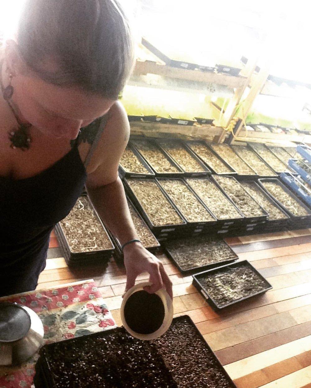 microgreens planting urban farming