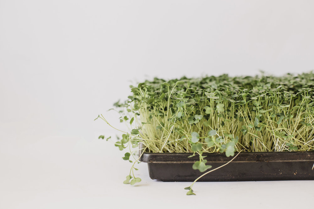 Growing Microgreens - Come learn how to grow an Uber Local superfood right in your own home. This will be a hands on workshop. We will plant different varieties of microgreens together for you to take home. As well we will tour the Green Sister micro-grow op and taste test various greens grown on site.