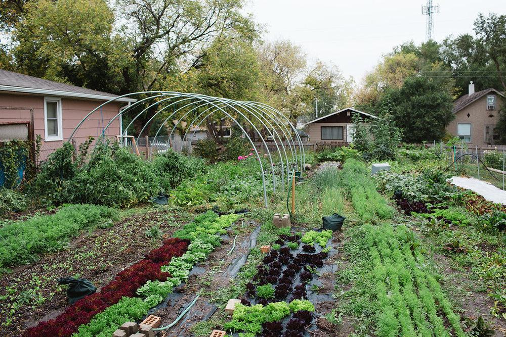 Harvest the abundance! -