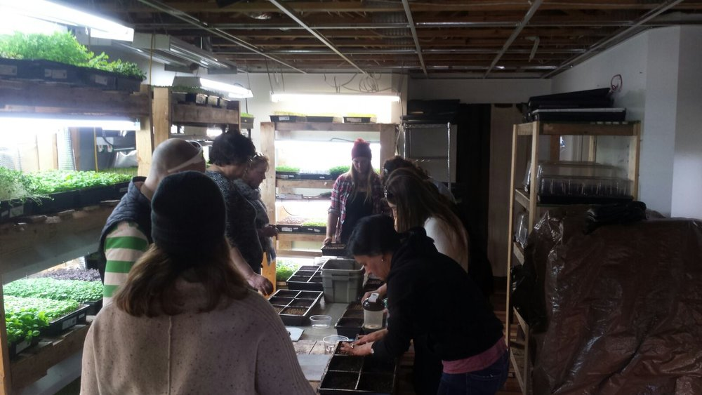 Growing Microgreens - There has been a lot of interest in learning how to grow your own microgreens so I'm adding another class on April 14th as well as May 12th from 1pm-2:30pm!