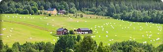landsbygd