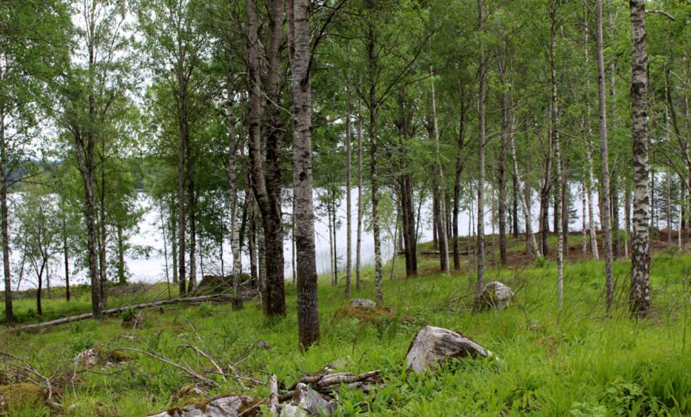 Tack vare ett antal utpekade LIS-områden i ÖP är förhoppningen att det nästa år står fem nybyggda villor vid Norens strand på bilden. Det skulle öka nybyggnationstakten i kommunen med närmare 1 000 procent.