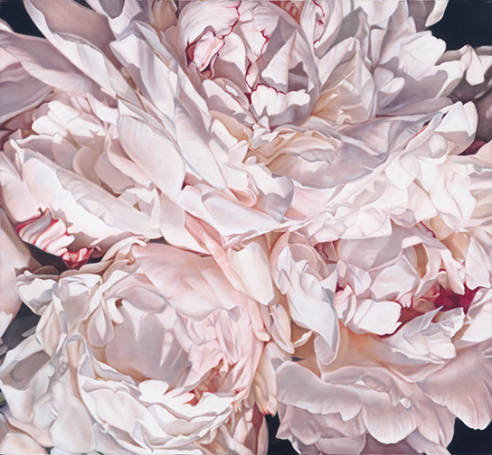 Peonies Close Up
