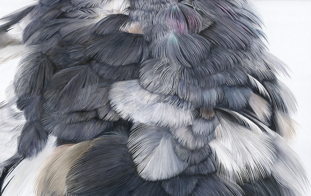 Moulting Feathers
