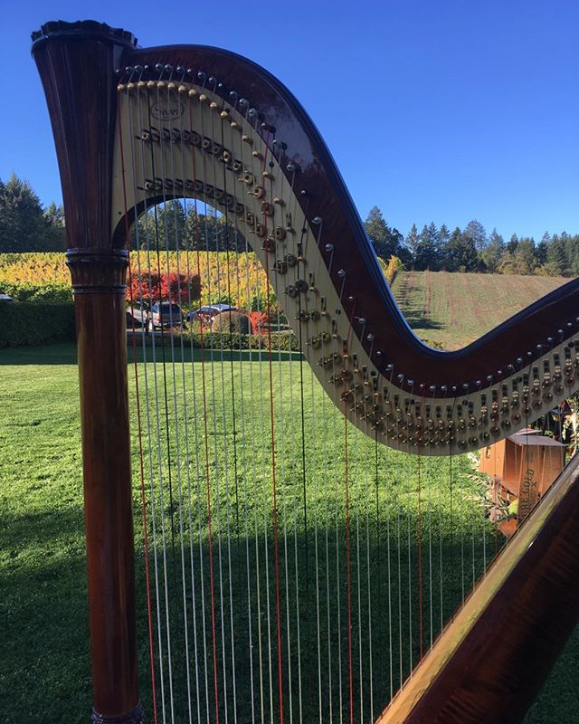 Looking forward to playing at those sunny weddings this summer! Learn more at www.leighbrownharp.com#harp#oregon#weddings#oregonweddings